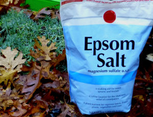 Epsom Salt Uses for Gardening