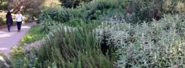 mediterranean climate plants