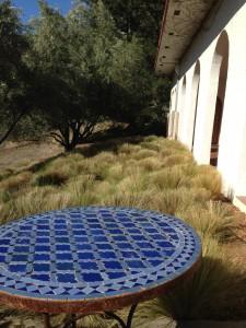 stipa grass grouping