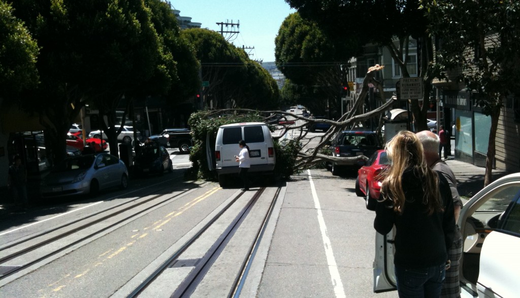 ficus limb crashes down on van