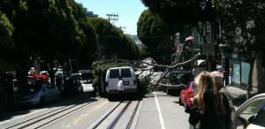 tree crashes onto van