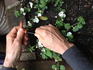 adding a connector to drip irrigation