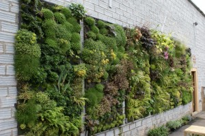 vvertical garden ideas