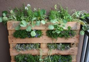 pallet-gardening