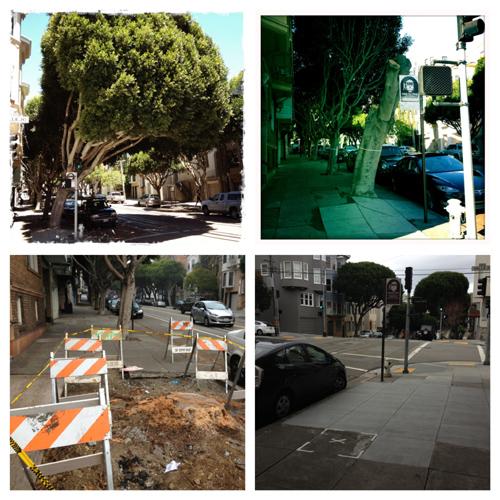 loss of a street tree