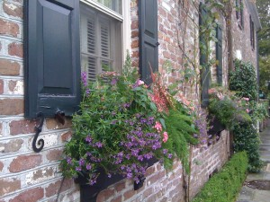 flowering-window-boxes