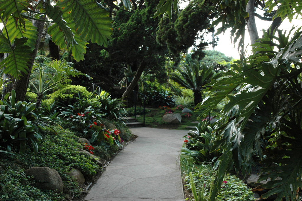 Green Garden and Path