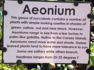 about aeoniums