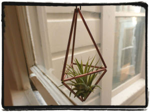 tillandsia and holder