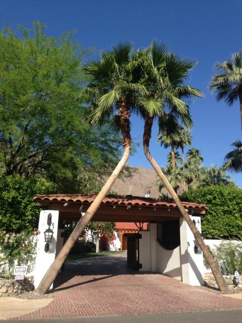 Palm trees as framing