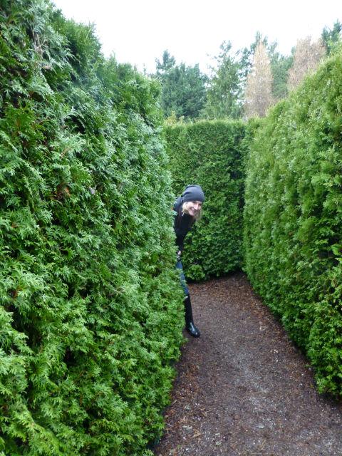 Cedar Hedge Maze
