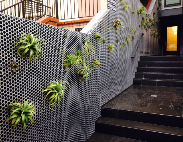 steel living wall with air plants