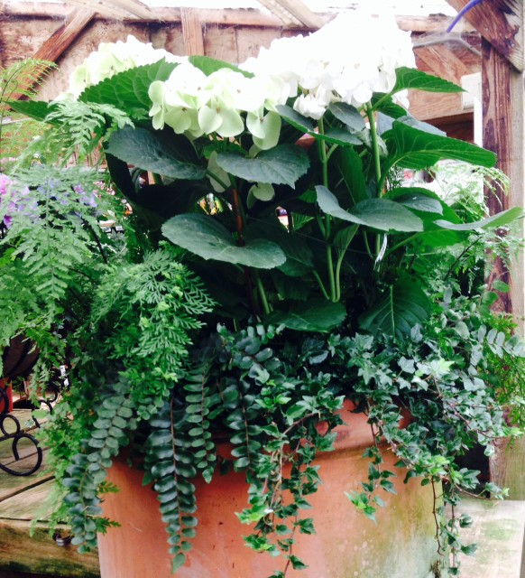 white hydrangea with fern pot