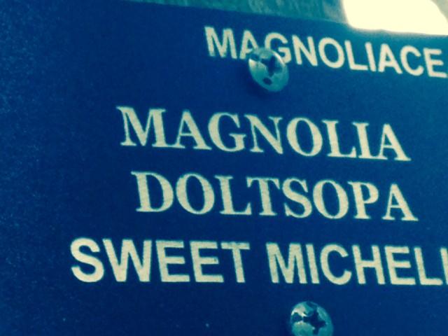magnolia doltsopa sign