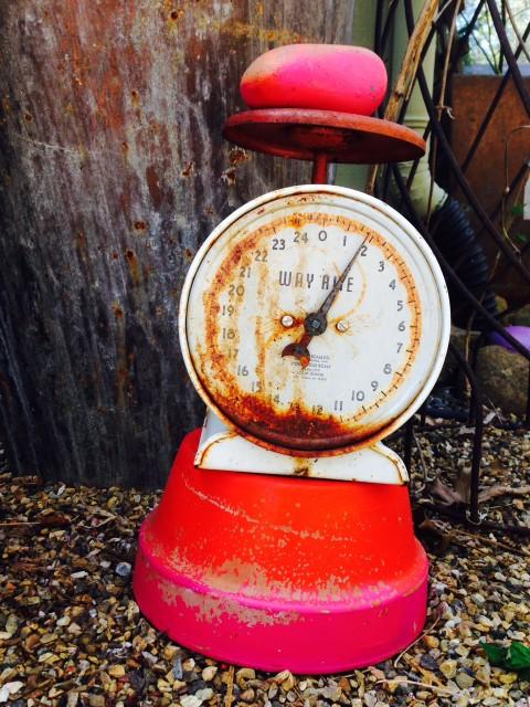 garden scale on pot
