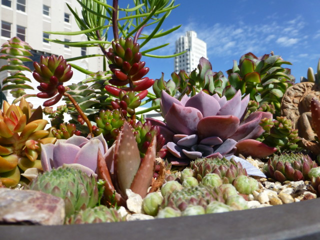 succulent dish planting growing