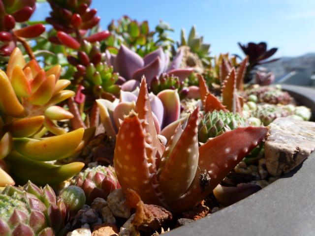 succulent planter close up