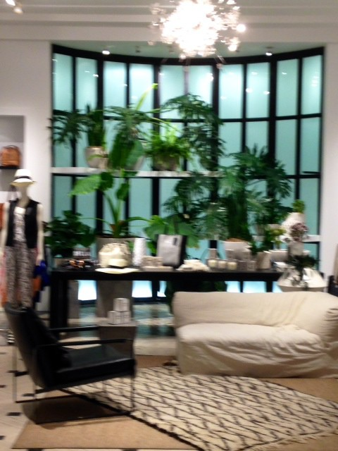indoor plants at banana republic
