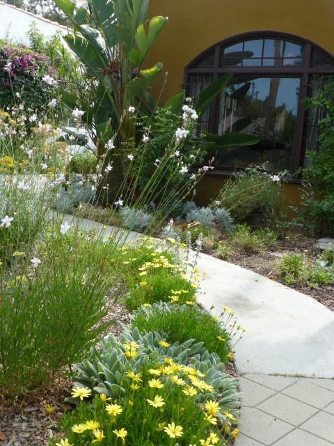 path through dry garden