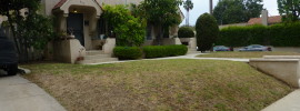 dying front lawn