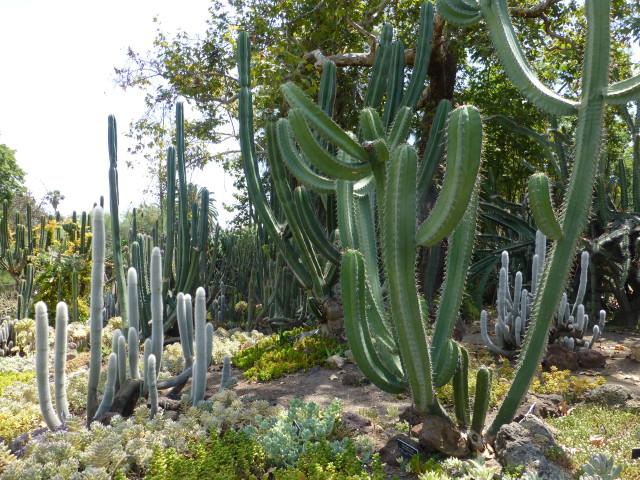 Desert Garden @ Huntington Botanical Gardens