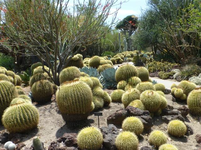 Desert Garden Barrel Cactus