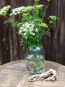 queen anne's lace flower in a vase