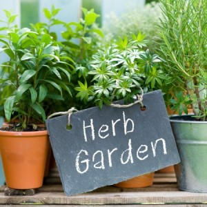 Part 2 of Our Zen Gardening Series – Having a Small Herb Pot can Make You So Happy!