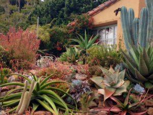 front garden succulents