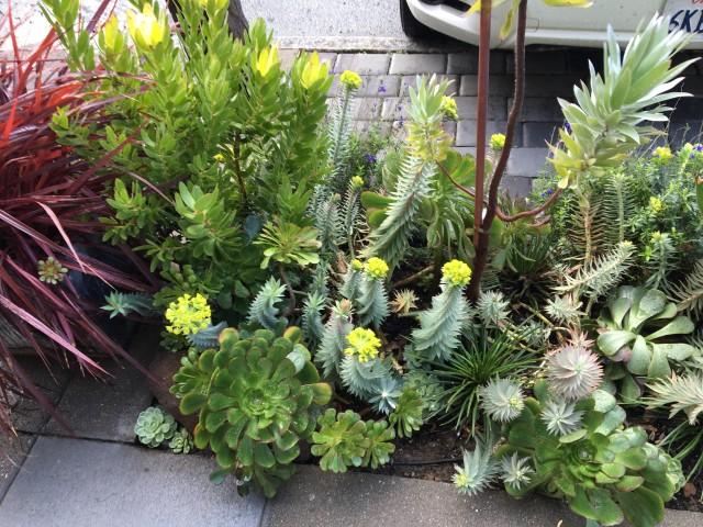 Example of neighborhood sidewalk garden