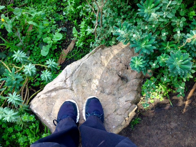 spurge surrounding stepping stone