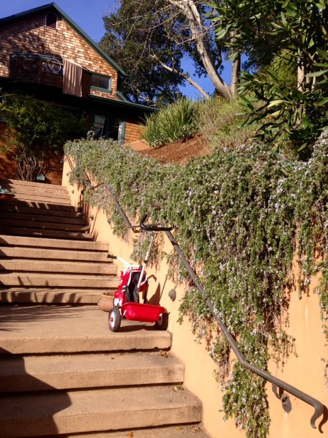 Trailing rosemary wall with tricycle