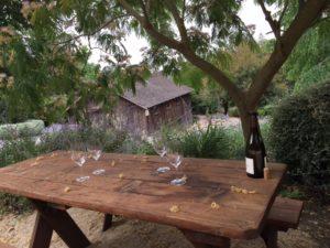 wine under the mimosa tree - Albizia julibrissin