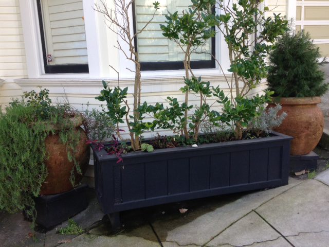 black planter with 1 dead fig