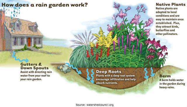 Example of a Rain Garden