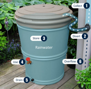 Urban Farmer Rain Barrel