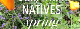 california natives spring bloom