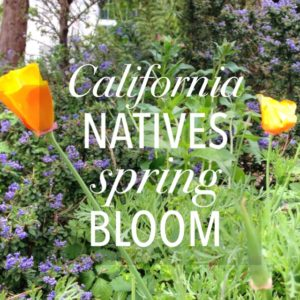 california natives spring bloom