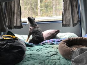 dog in camper van enjoying view of nature