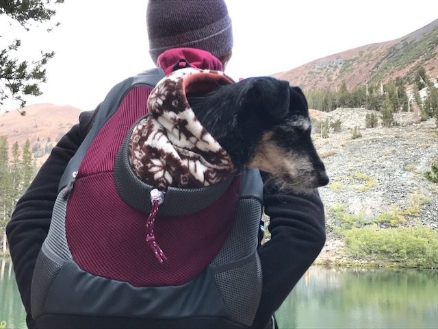 dog in a special backpack hiking