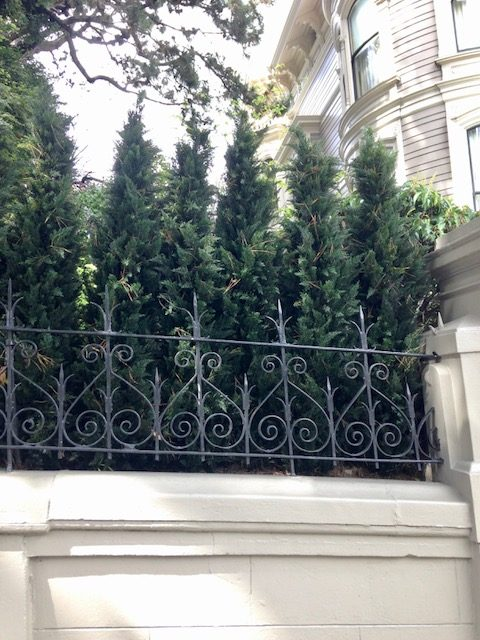 6 artificial Arborvitae trees as a privacy screen, san francisco