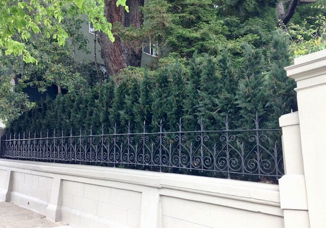 Artificial Arborvitae screen in San Francisco