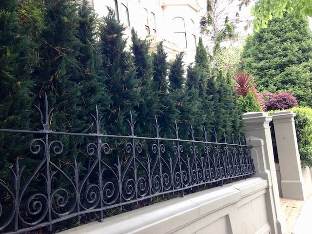 Artificial Arborvitae used as a long privacy screen