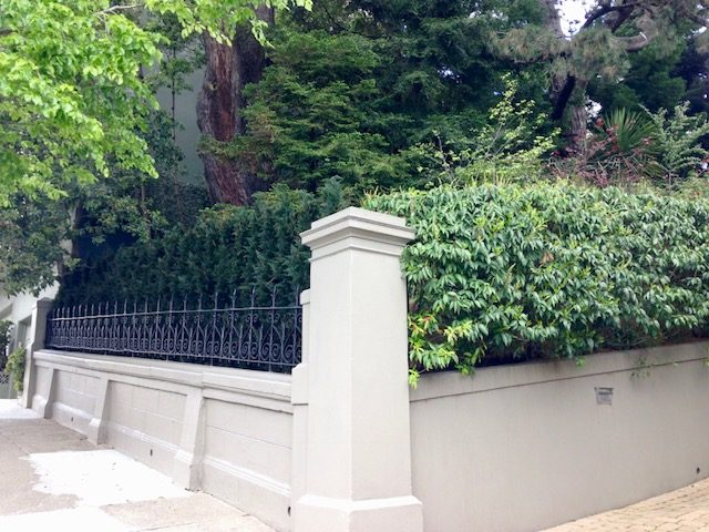 evergreen trees next to live real shrub at property, san francisco