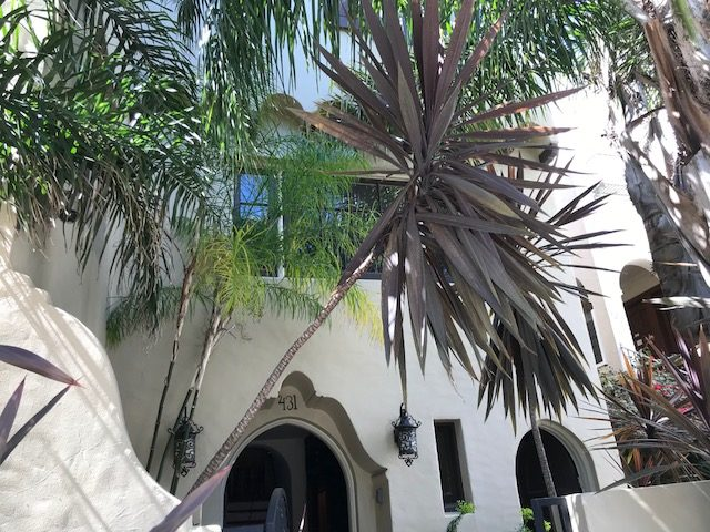 Architectural: Cordyline and Palms