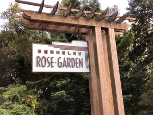 Berkeley California Rose Garden