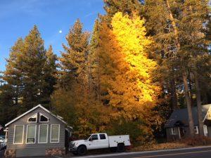 Quaking aspen Lake Tahoe