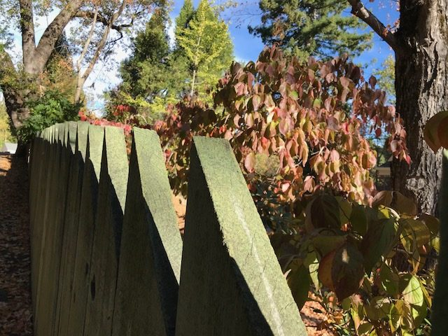 fence and dogwood, Nevada City, CA