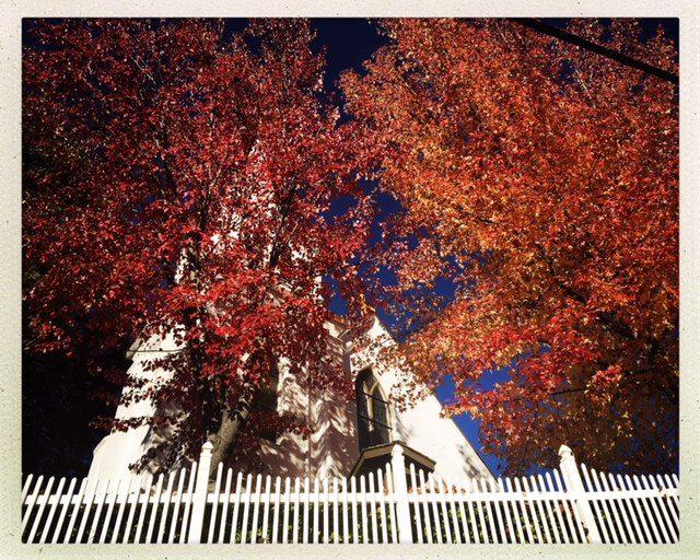 Acer rubrum, Fall color, Nevada City, CA