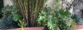 Restio plants